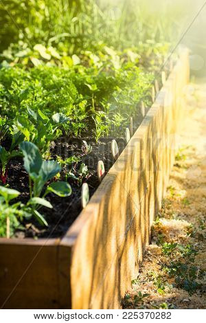 vegetables grow in a wooden garden bed in a summer sunny day