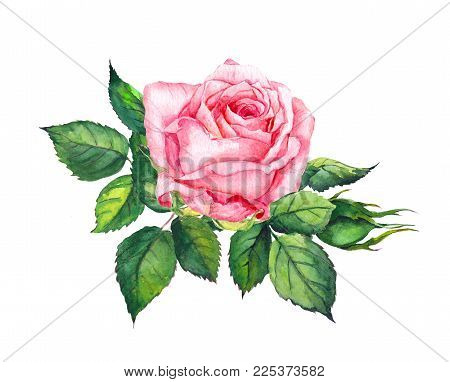 Pink Rose With Leaves. Watercolor For Wedding Or Save Date Card