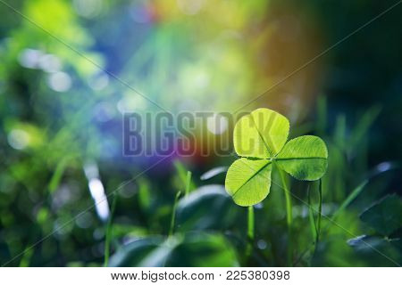 Sunlit spring clover leaf in meadow