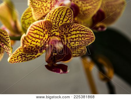 beautiful orchid on the rise on a wooden background