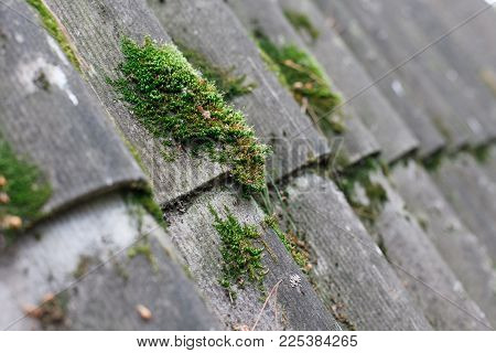 Texture Of Gray Fiber Asbestos Roof Sheets With Green Moss, Closeup. Pattern Of Weathered Old Roof,