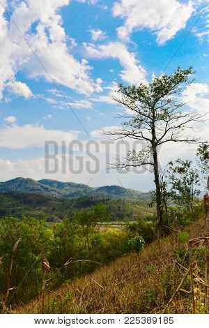 Big Tree On The Hill, High Angle View, Clear Sky, White Cloud