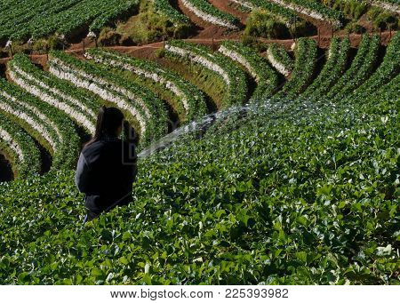 Asian Women Relax In The Holiday, Stand Photograph Selfie In The Strawberry Farm, Strawberry Plantat