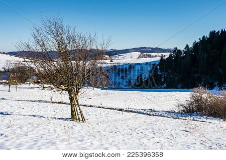 Tree On Snow Covered Agricultural Fields. Beautiful Winter Landscape Of Mountainous Rural Area