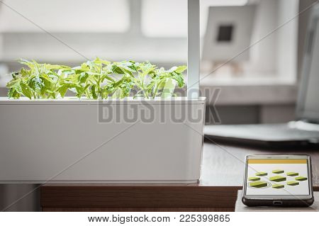 Green Potted Plants In The Modern Smart Lab And Remote Control In The Room