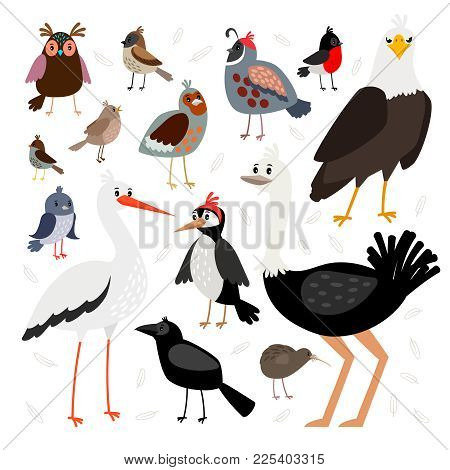 Birds. Vector Bird Collection Isolated On White Background, Crow And American Eagle, Pigeon And Wood