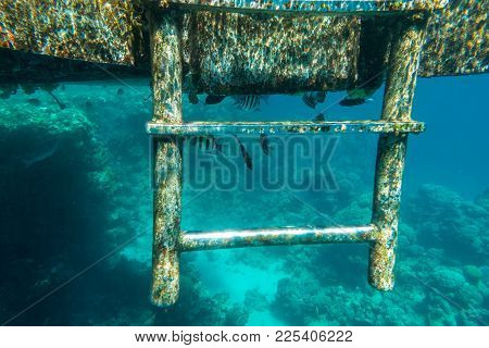 Little Tropical Fish Living Under Pontoon In Red Sea Near Coral Reef, Underwater Shoot