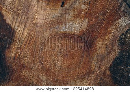 Wood Trunks Background. Cross Section Of Tree Trunk. Wood Texture And Background For Designers. Clos