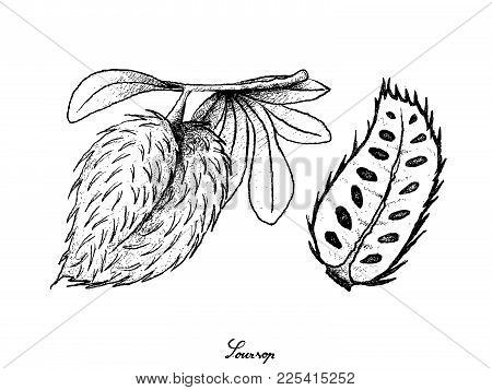 Tropical Fruit, Illustration Hand Drawn Sketch Of Soursop Or Annona Muricata Fruit Isolated On White