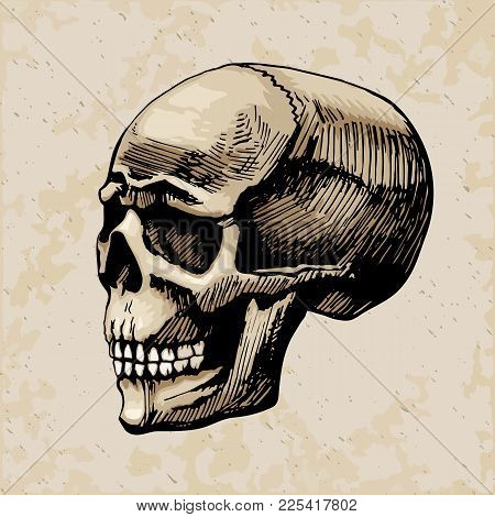 Skull Man Vector Sketch Colored Painted By Hands. Illustration Stylized For Engraving. The Dead Head