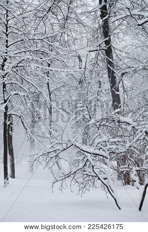 Snowfall In The Park, Winter Weather Scene, Snow Covered Trees Landscape. Bad Weather Concept. Selec