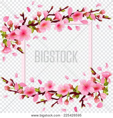 Realistic Sakura Japan Cherry Branch With Blooming Flowers And Frame On Transparent Background. Spri
