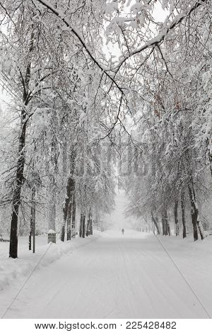 Snowfall In The Park, Snowy Winter Road, Snow Covered Trees Landscape. Bad Weather Concept