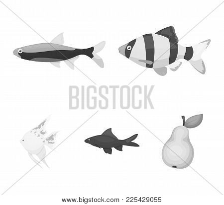 Angelfish, Common, Barbus, Neon.fish Set Collection Icons In Monochrome Style Vector Symbol Stock Il