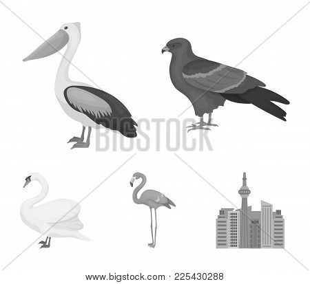 Kite, Pelican, Flamingo, Swan. Birds Set Collection Icons In Monochrome Style Vector Symbol Stock Il