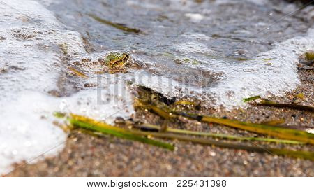 Frog Submerged Of Water With Air Bubble At The Beach