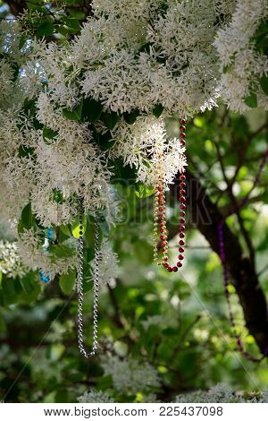 Strings Of Sparkling Beads Dangle From A Flowering Tree In This Image From A Mardi Gras Celebration.