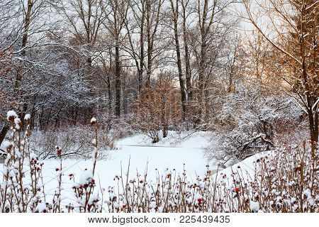 Snowy Winter Forest With Frozen Lake. Colorful Season Background. White Frozen Lake, Trees And Bush.
