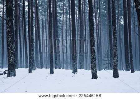 Trees In A Bleak Winter Forest. Circle Frosty. The Blue Hue Of The Landscape.