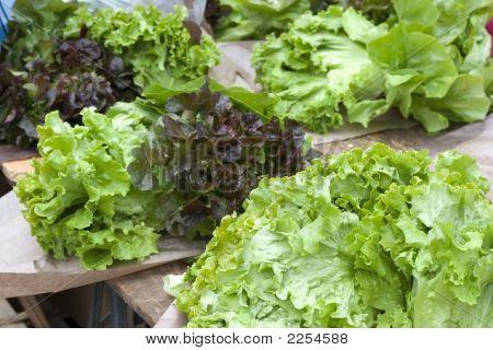 Lettuce At Farmer'S Market, Paris, France