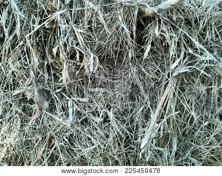 Grass Heap Are Dry In The Garden
