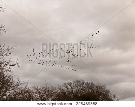 Sky Flock Of Birds Cloudy Moody Overcast Weather Migration