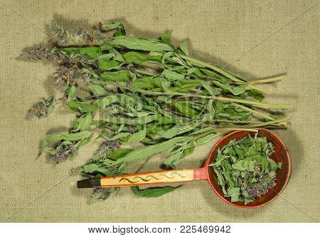 Sage, Salvia. Dry Herbs For Use In Alternative Medicine, Phytotherapy, Spa, Herbal Cosmetics. Prepar