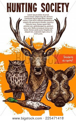 Hunting Sport Banner With Wild Animal And Bird. Deer, Duck, Boar And Owl Sketches For Announcement P