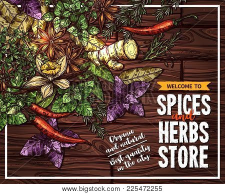 Spice And Herb Poster Of Seasoning On Wooden Background. Rosemary, Thyme, Chilli Pepper And Basil, G