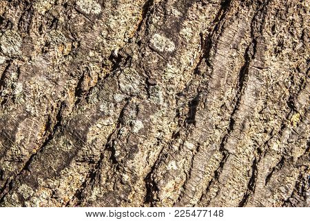 Seamless Tree Bark Background. Brown Tileable Texture Of The Old Tree.