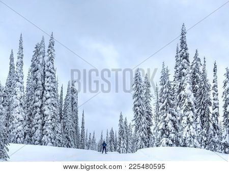 Nordic Ski Near Kelowna At Big White Ski Resort On A Snowy Day. Cross Country Skiing Near Kelowna. B