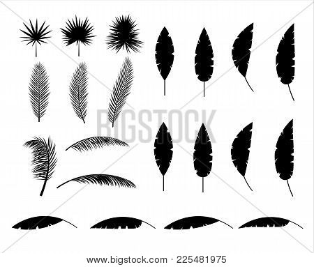 Tropical Leaves Silhouette. Jungle Leaves Set. Coconut Palm, Monstera, Fan Palm, Rhapis, Banana Tree