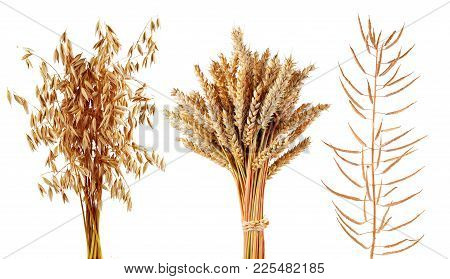 Ripe Cereals Plants Oats,wheat And Canola Isolated On A White Background. Collection Of Agricultural