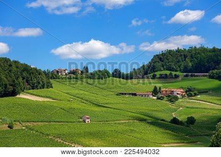 Green vineyards on the hill under blue sky with white cliuds in Piedmont, Northern Italy.