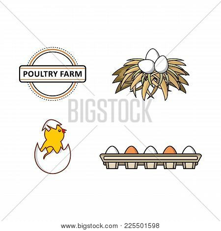 Vector Flat Farm Poultry Symbols Set. Chicken, Small Chick Hatching From Egg, White Eggs In Hay Nest