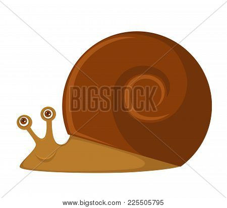 Snail With Big Brown Round Shell And Friendly Face. Unusual Exotic Pet That Has Eyes On Two Small Ho