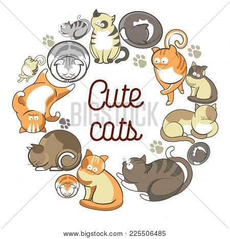 Cute Cats With Fluffy Fur That Lies In Circle On Promotional Poster. Adorable Domestic Animals With
