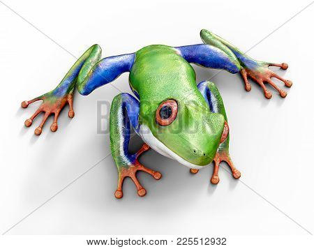 Realistic 3d Rendering Of A Green, Blue And Orange Colored Red-eyed Tree Frog, Agalychnis Callidryas