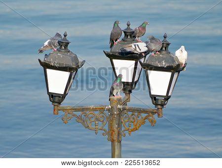 The Pigeons Mess On Streetlight Against Sea