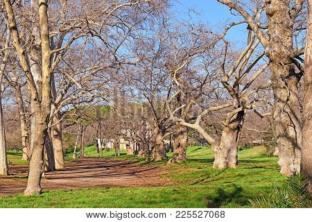 Alley With Age-old Plane Trees In The Public Park - Borghese Garden At Pincian Hill In Rome, Italy