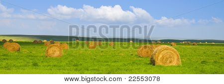 Beautiful Golden Hay Bales