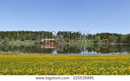 Farm And Farmland Around A Lake. Dandelion Field This Side. Bright Sunshine.