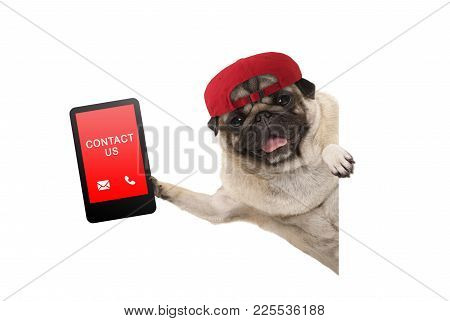 Frolic Pug Puppy Dog With Red Cap, Holding Up Tablet Phone With Text Contact Us, Hanging Sideways Fr