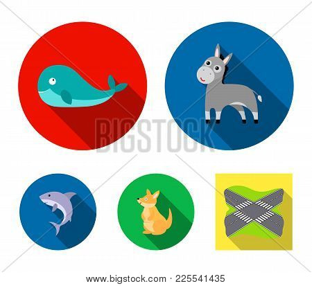 Donkey, Whale, Kangaroo, Shark.animal Set Collection Icons In Flat Style Vector Symbol Stock Illustr