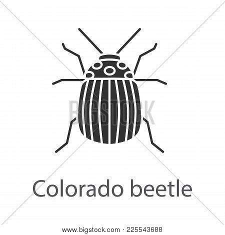 Colorado Beetle Glyph Icon. Insect Pest. Potato Bug. Silhouette Symbol. Negative Space. Vector Isola