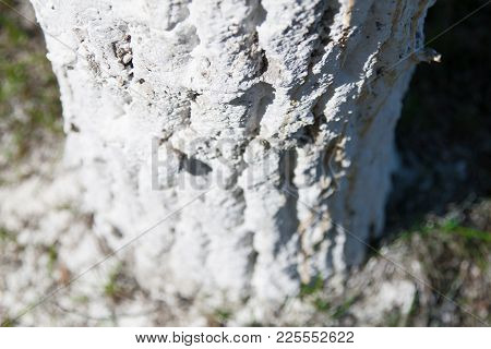 Abstract Background. Textured Tree Bark In White