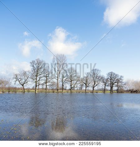 Trees On Flooded Flood Plains Of River Ijssel Near Zalk Between Kampen And Zwolle In The Netherlands