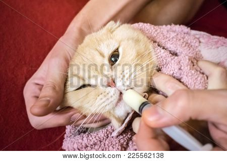 How To Give A Cat Liquid Medicine. Ways To Give A Cat A Pill. A Man's Hand Gives A Medicine In A Syr