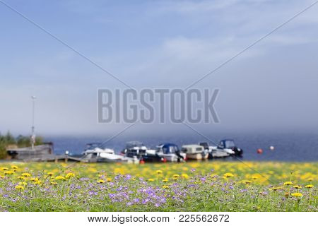 Cranes-bill And Dandelions This Side Some Fuzzy Boats. Fog At Sea.