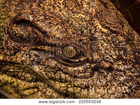 A Close View Of A Crocodile's Yellow Eye With A Vertical-slit Shaped Pupil.